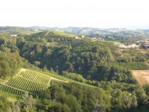 Italy Piedmont - Barbaresco Hillside View - 07-07
